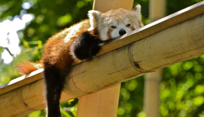 what-is-a-bamboo-pillow