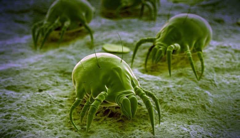 Can-dust-mites-live-in-memory-foam-pillows-or-mattresses